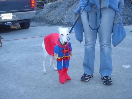 Las imagenes graciosas del día Supper_man_dog_cosplay